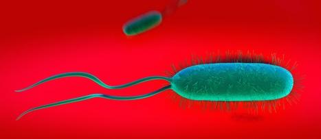Čo je to Helikobakter Pylori ?